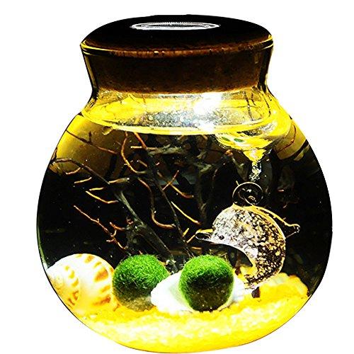 (OMEM Aquarium Kits-Living Moss Ball,Valentine gift Sea Fan, Gravel, Cone Seashell, Work Desk Decoration (Yellow))
