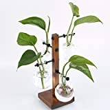 Siyaglass Decorative Clear Glass Planter Bulb Vases with European Beech Wood Holder Stand