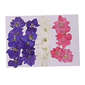 Baosity 20 Pieces Natural Dried Flowers Real Flower Delphinium for Craft Card Making DIY Pendants Charms Jewelry 46