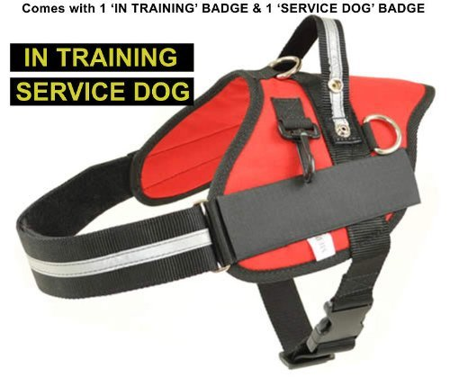Large Red Professional Service Dog Harness with 'IN TRAINING' & 'SERVICE DOG' Badges Included Girth 30  37  Redline K9