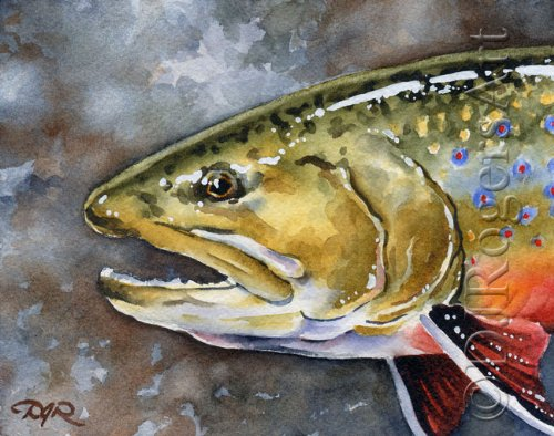 """""""Brook Trout"""" Fly Fishing Art Print Signed by Artist DJ Rogers"""