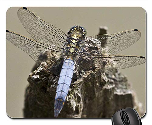 Mouse Pads - Dragonfly Insect Close Wing Filigree Dragon-Fly