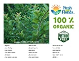 Fresh Guava Leaves - 1 oz (approx. 10 to 25 leaves) - Organic with no pesticides or chemical sprays - Certified fresh from florida - www.hilltopfresh.com