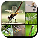Dragonfly Collage Decorative Beverage Coasters set of 6