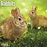 Rabbits Wall Calendar 2020