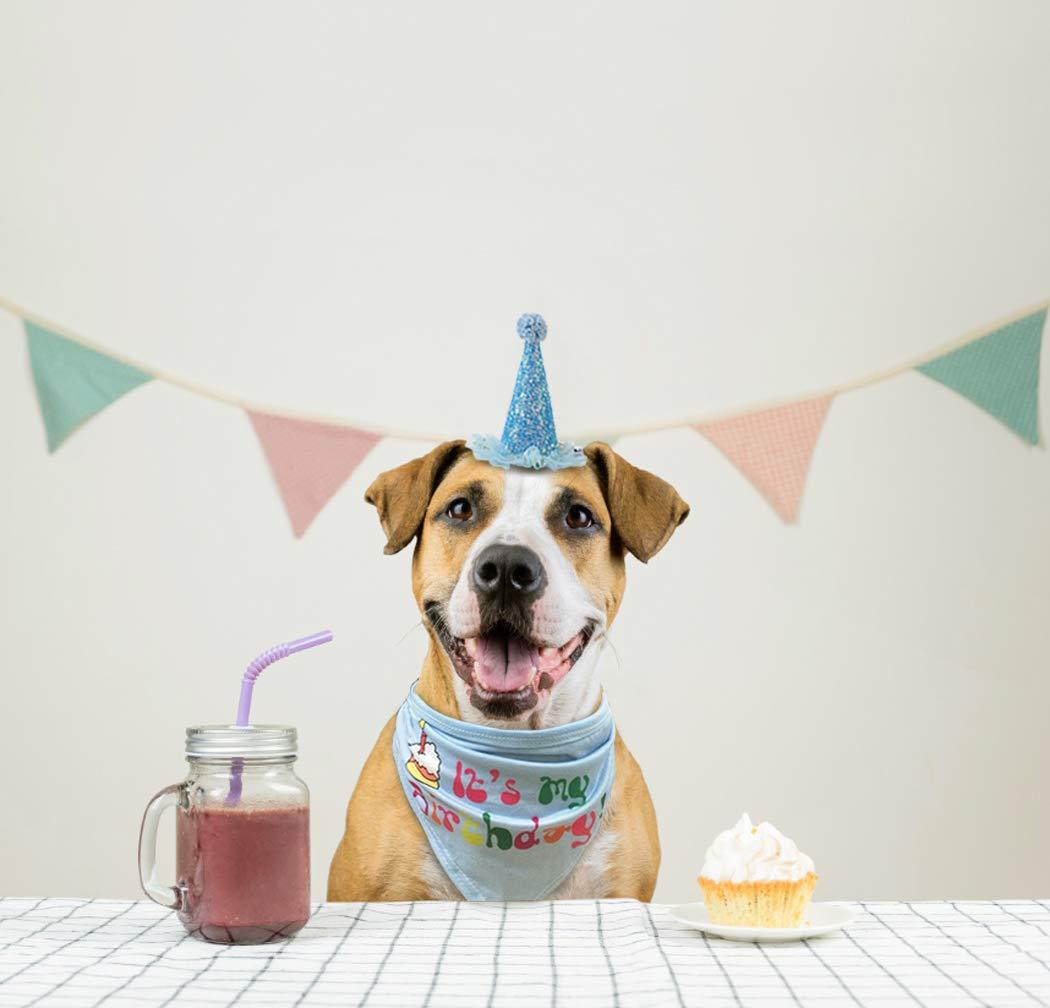 Amazon.com: Chidra - Bandana de cumpleaños para perro con ...