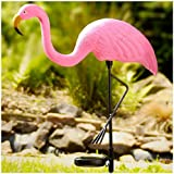Fishtec 2546 - Lámpara solar decorativa en forma de flamenco (36 x 8 x 81 cm), color rosa