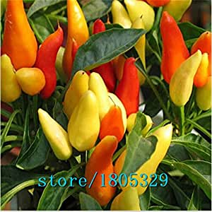 Rainbow Chili peppers seeds 100pcs Multi color Pepper seeds Interest Mini Garden Home Plant