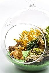 "Terrarium Kit   Deer Meadow   Wildlife Lovers Series   Complete Terrarium Gift Set   4"" Glass Globe Terrarium Container   Deer Miniature   Green Sand   Bark Chips   Nautical Crush Trading TM"