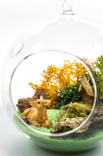 "Terrarium Kit | Deer Meadow | Wildlife Lovers Series | Complete Terrarium Gift Set | 4"" Glass Globe Terrarium Container 