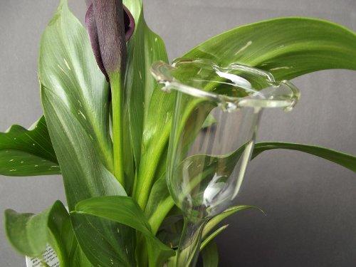 12 Stück, Durstkugel / Bewässerungskugel 3 cm, für kleine Pflanzen, mundgeblasen, frei geformt, Lauscha