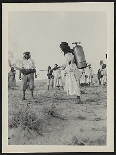 Man uses flame thrower to control locusts,Palestine,Pest Control,1915-1930 Photo