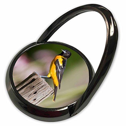 Oriole Garden (3dRose Danita Delimont - Birds - Baltimore Oriole female in flower garden Marion, Illinois, USA. - Phone Ring (phr_207600_1))