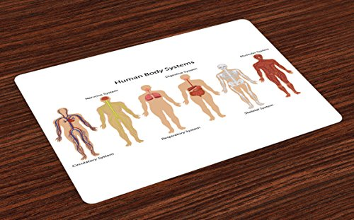 Ambesonne Human Anatomy Place Mats Set of 4, Human Body with Central Nervous Network Skeleton and Neurons Image Muscle System, Washable Fabric Placemats for Dining Room Kitchen Table Decor, Multi
