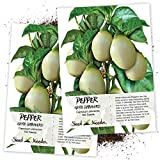 Seed Needs, White Habanero Pepper (Capsicum chinense) Twin Pack of 100 Seeds Each Non-GMO