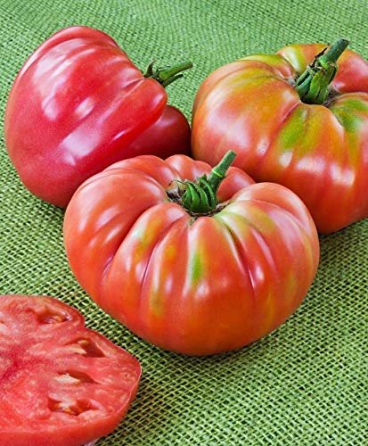 (German Queen Tomato Seeds (40 Seed Pack))