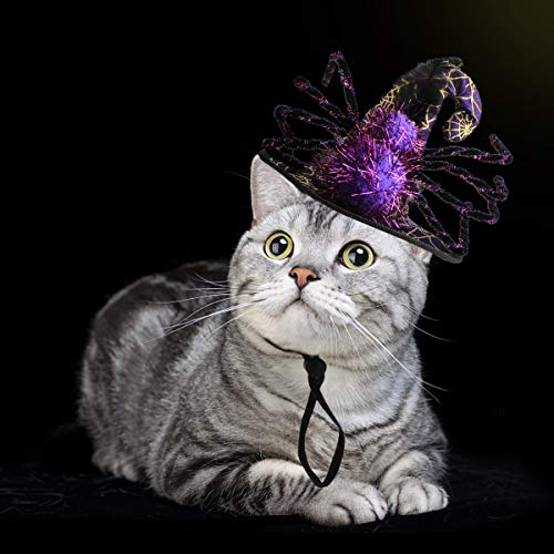 Cat Costume for Halloween - Witch Wizard