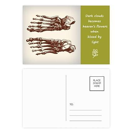 Set de tarjetas postales de poesía para dibujo de hueso de ...