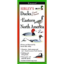 Sibley's Ducks, Geese & Swans of Eastern North America - Folding Guide