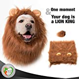 Beloved Pets Lion Mane for Dog - Realistic Costume for Dog With Ears and Tail - Christmas Gift Dog Clothes, Party Dress for Medium and Large Dogs (Dark Brown)