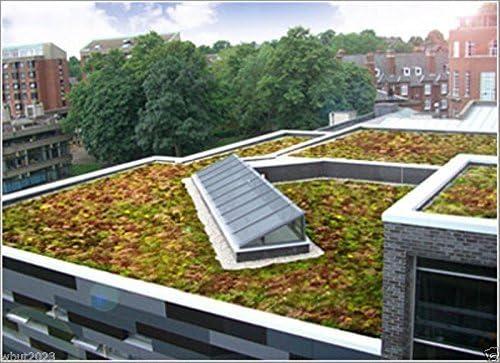 200 Semillas Semillas de Sedum-techo-jardín Colores Hermoso Mix - verdes, amarillos, rojos y púrpuras!: Amazon.es: Jardín