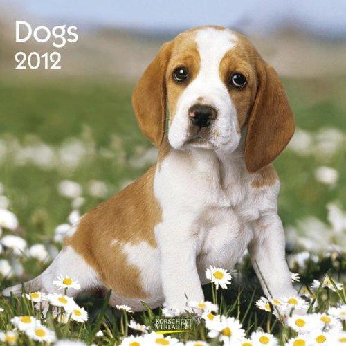 Dogs 2012. Broschürenkalender