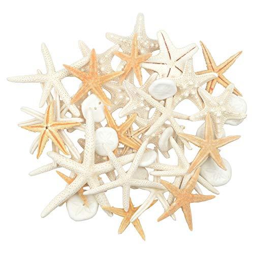Jangostor 30 PCS Starfish10 PCS Sand Dollars Mixed Ocean Beach Starfish-Natural Colorful Seashells Starfish Perfect for Wedding Decor Beach Theme Party, Home Decorations,DIY Crafts, Fish Tank ()