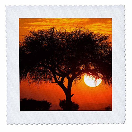 Danita Delimont - Sunsets - Etosha NP, West Entrance, Namibia, Acacia tree at sunset. - 12x12 inch quilt square (qs_225064_4)