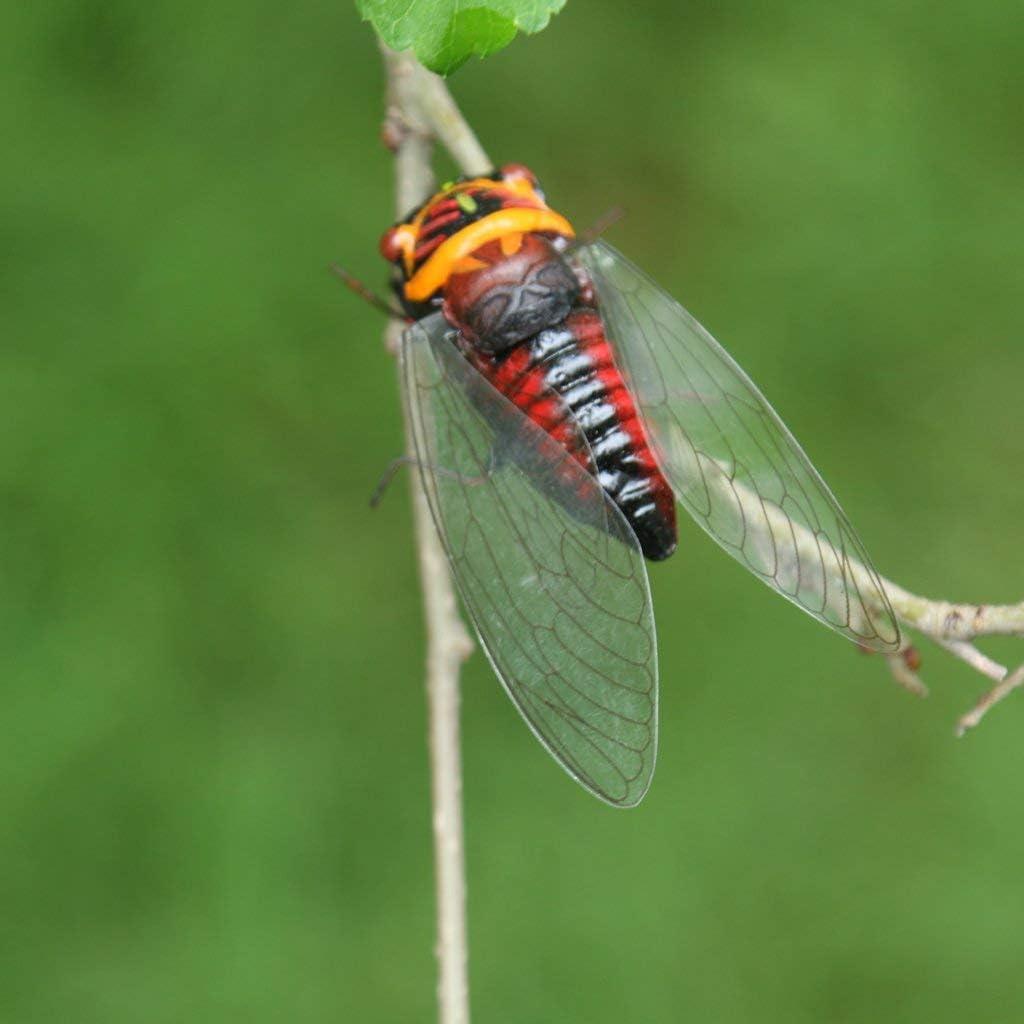 4x Fake Insect Cicada with Magnet Garden Tree Decor Bonsai Art Ornament