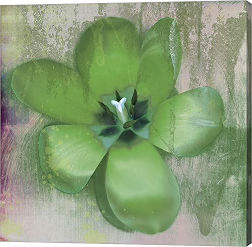 - Tulip Fresco (Green) by Erin Clark Canvas Art Wall Picture, Gallery Wrap, 16 x 16 inches