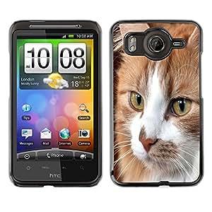 Vortex Accessory Carcasa Protectora Para HTC DESIRE HD - Cymric American Shorthair House Cat -