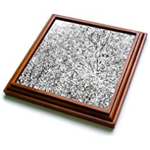 3dRose Alexis Photography - Abstracts - Abstracts of Nature - Willow Tree In Black And White - 8x8 Trivet with 6x6 ceramic tile (trv_267315_1)