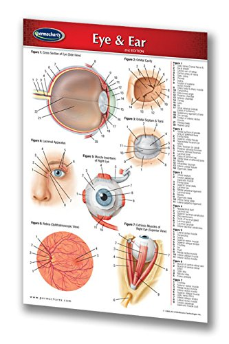 Eye & Ear Pocket Size - Medical Quick Reference Guide by - Spectacles Size Guide