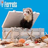 Ferrets 2018 12 x 12 Inch Monthly Square Wall Calendar, Domestic Furry Animals