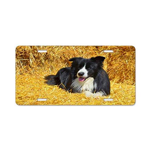 - zhangjiacovesli Border Collie British Sheepdog License Plate Cover Cute Novelty Auto Car Tag Aluminum USA and Canada 4 Hole and Screws