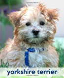 Yorkshire Terrier, TodaysPetPublishing, 1494890542