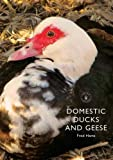 img - for Domestic Ducks and Geese (Shire Library) book / textbook / text book