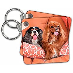 Danita Delimont - Dogs - Cavaliers on pillows, MR - Key Chains - set of 6 Key Chains (kc_258242_3)