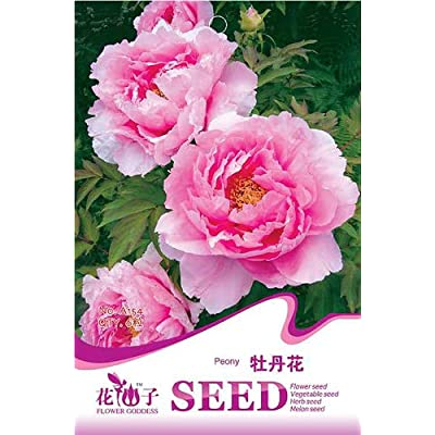 Business sasha Silky Pink Peony Flower Seeds 6 Seed Pack Easy Grow (3) : Garden & Outdoor