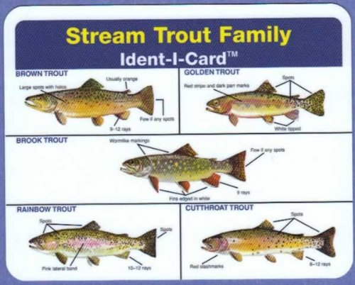 Stream Trout Ident-I-Card - Freshwater Fish Identification ()