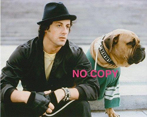 Rocky Sylvester Stallone, Photo 8x10, sp0987