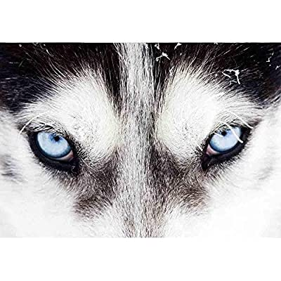 Charming Craft, Close Up on Blue Eyes of a Husky Dog, Premium Product