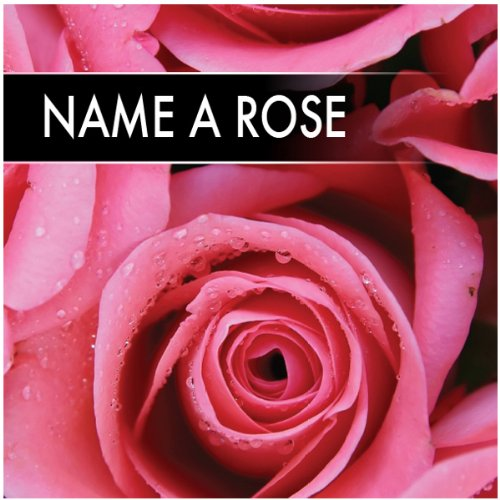 Name a rose grow a rose gift pack amazon kitchen home name a rose grow a rose gift pack negle Choice Image
