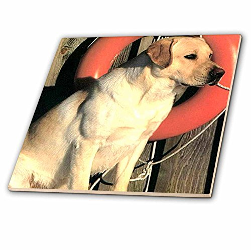 3dRose Dogs Labrador Retriever - Yellow Labrador Lab - 6 Inch Ceramic Tile (ct_741_2)