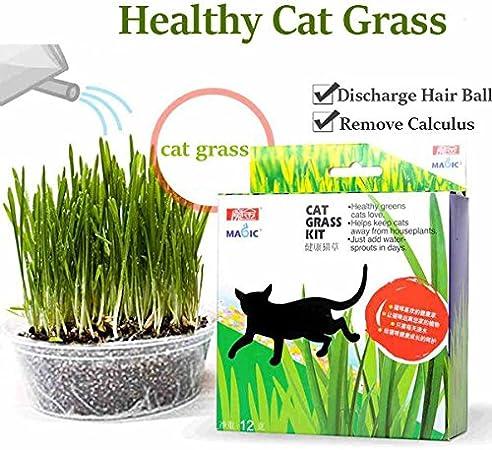 Calli Semilla de la Hierba de Gato mágica Mint reduct digestión Bola Kit de Hierba para Gatos de Pelo: Amazon.es: Hogar