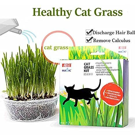 Bargain World Semilla de la Hierba de Gato Mã¡Gica Mint reduct digestión Bola Kit de Hierba para Gatos de Pelo: Amazon.es: Hogar