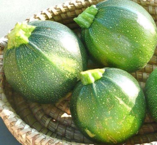 Round Zucchini Summer Squash 25 seeds * Heirloom * Non GMO *