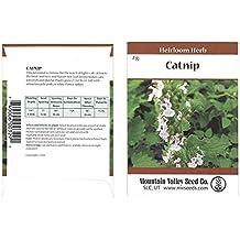 Catnip Herb Garden Seeds - 2 Gram Packet - Non-GMO, Heirloom Herbal Gardening Seeds - Nepeta cataria
