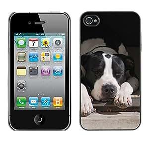 YiPhone /// Prima de resorte delgada de la cubierta del caso de Shell Armor - Boston Terrier White Black Dog - Apple iPhone 4 / 4S