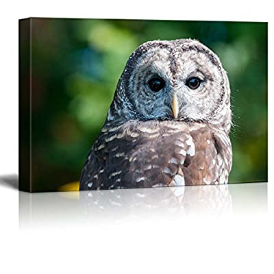Canvas Prints Wall Art - Barred Owl on Green Background - 16